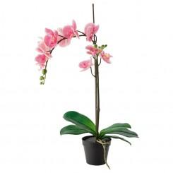 گل ارکیده ایکیا رنگ بنفش FEJKA